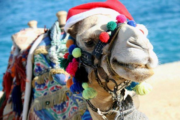 Как празднуют в египте в новый год